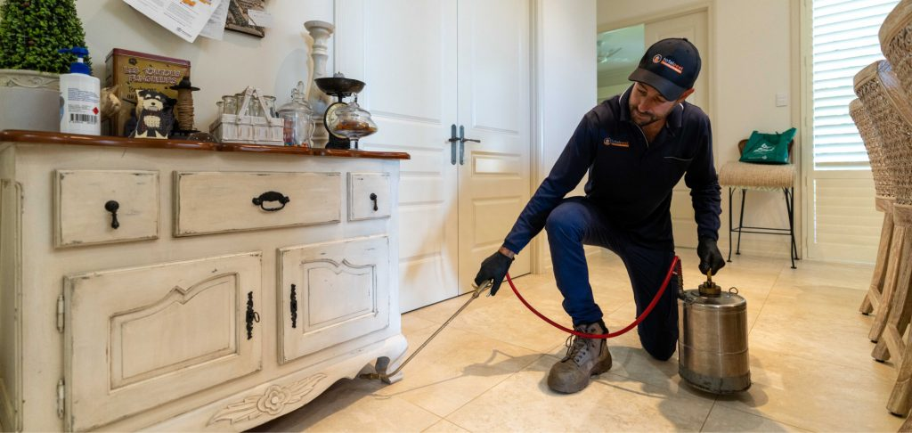 Total Pest Management - spraying pests in the kitchen - Townsville Australia